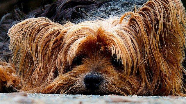 piensos para perros